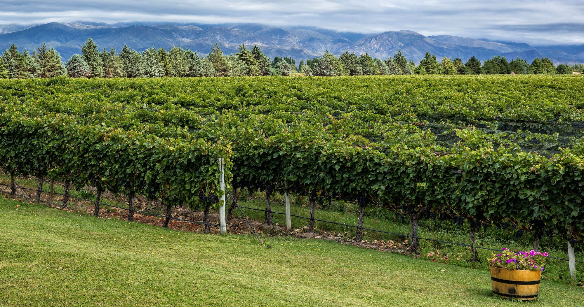 Best Wineries